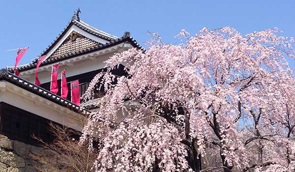 東信州の桜の開花状況